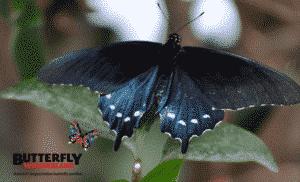 Photo Credit: http://butterflywonderland.com
