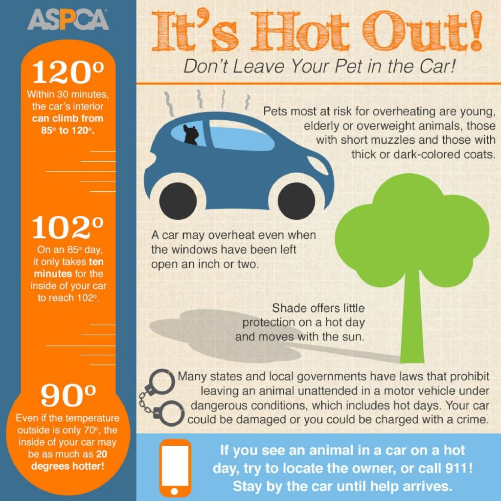 What to Do If You See a Pet Locked in a Hot Car
